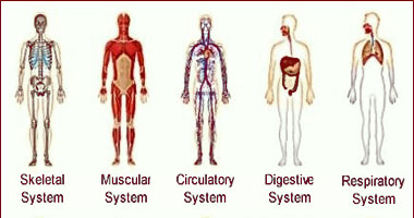 Effects of Massage on Body Systems: Muscular, Nervous